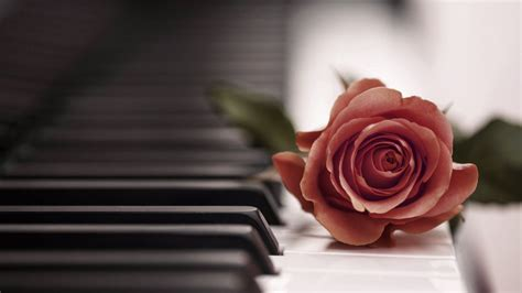 Rose Piano Wallpapers Phone with HD Desktop 1920x1080 px