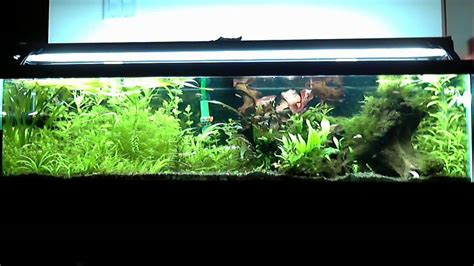 33 Gallon Long Freshwater Planted Fish Tank Update #4 in