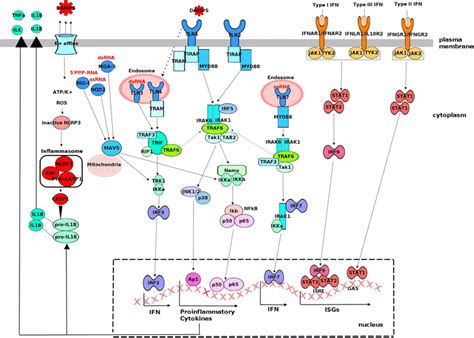 Respiratory viral infections and host responses; insights