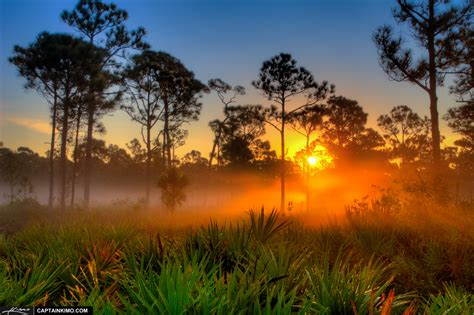 Sunrise Over Foggy Morning in Florida Pine Woods | HDR