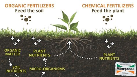 Here is why organic fertilizers are superior to chemical