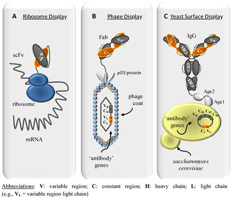 Molecules   Free Full-Text   High Affinity, Developability