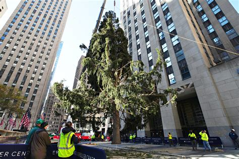 The Rockefeller Christmas Tree Goes Viral With 2020 Memes