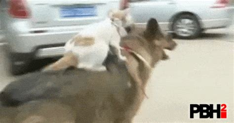 27 Funny GIFs Of Animals Catching A Ride On Other Animals
