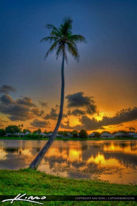 Coconut Tree at Lake Catherine during Sunset